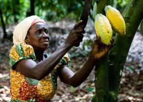 La producción de cacao en Côte d'Ivoire puede disminuir debido a la falta de electricidad. ¿Crecerán las cotizaciones de Cacao?