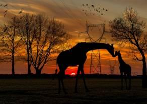 Aprende a levantarte, como las jirafas