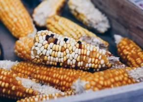 Brasil y Argentina elevaron su pronóstico de cosecha de maíz. ¿Qué pasará con las cotizaciones de Maíz ?