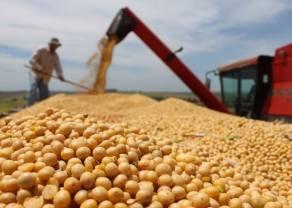 Buenas ventas de trigo y de soja mantuvieron sus precios en alza