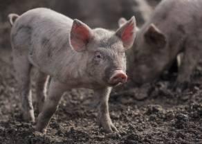 ¿Continuarán cayendo los precios de cerdo magro ?