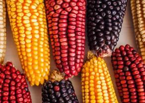 EEUU se carga los precios de las materias primas, ¿qué pasa con el precio del maíz?