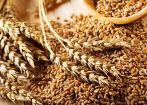 El clima seco y las elevadas importaciones chinas respaldan el precio del trigo. ¿Continuará el rebote del precio del trigo?
