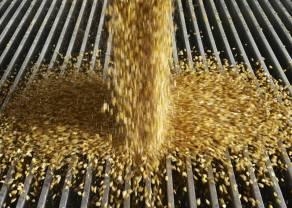 ¡El trigo bajo cero! Caen las exportaciones de la mano de los precios