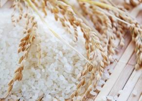 El USDA estima que la producción mundial de arroz disminuirá en la temporada de cultivo 2019/2020
