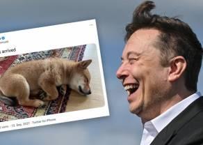 """¡Elon Musk y sus berrinches! ¿Has visto la que está líando ahora? El mercado """"negro"""" de las memecoins"""
