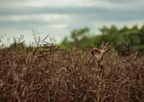 Estabilidad en las materias primas agrícolas