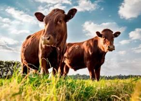 China ha aumentado las compras de carne vacuna estadounidense. ¿Continuarán creciendo las cotizaciones del ganado?