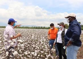 ¿Hasta cuándo subirán los precios? El USDA informó de una disminución en las plantaciones de algodón de los EEUU