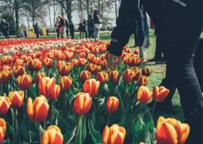 Historias Financieras: La Crisis de los Tulipanes