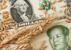 La caída del precio del trigo continúa. ¿Cuáles son sus consecuencias en los precios de trigo?