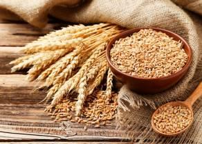 La caída del precio del trigo continúa luego de una mayor producción global pronosticada por IGC. ¿Continuarán disminuyendo los precios de trigo?