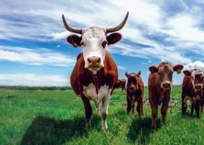 Las ventas minoristas de carne vacuna en Estados Unidos aumentaron en febrero. ¿Continuará creciendo LCATTLE?