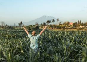 Materias primas agrícolas siguen al alza