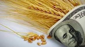 Materias primas : Las graves inundaciones podrían reducir la cosecha de trigo en Alemania. ¿Sube el precio del trigo?