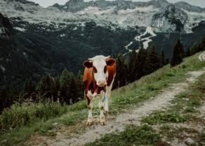¿Qué hay de las cotizaciones del ganado? Análisis técnico