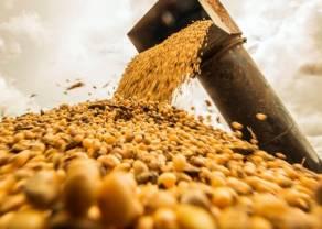 ¿Qué pasa con el mercado de los granos? En un escenario tirante USDA mostró números algo mayores a lo previsto
