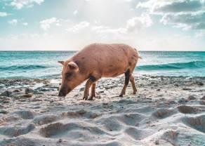 ¿Qué precios del cerdo hemos de esperar?