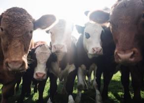 ¿Qué precios esperarnos del ganado de carne?
