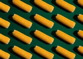 Recuperación por parte de los precios del maíz