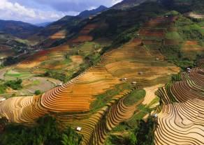 Se agotan las subidas en las materias primas agrícolas