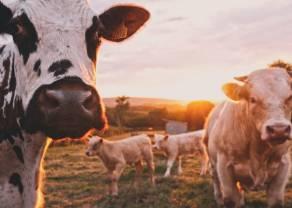 ¿Se reanudará el crecimiento de los precios de ganado?