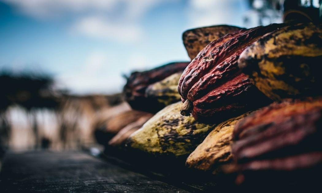 ¿Continuará el rebote de los prcios de cacao?
