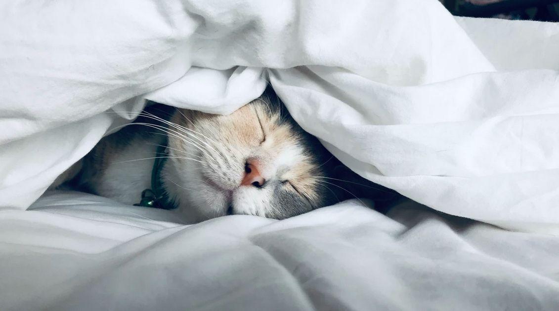 Duerme por la noche para saber lo que puedes perder o ganar. Las cinco mejores ventajas psicológicas del comercio y de la especulación en forex