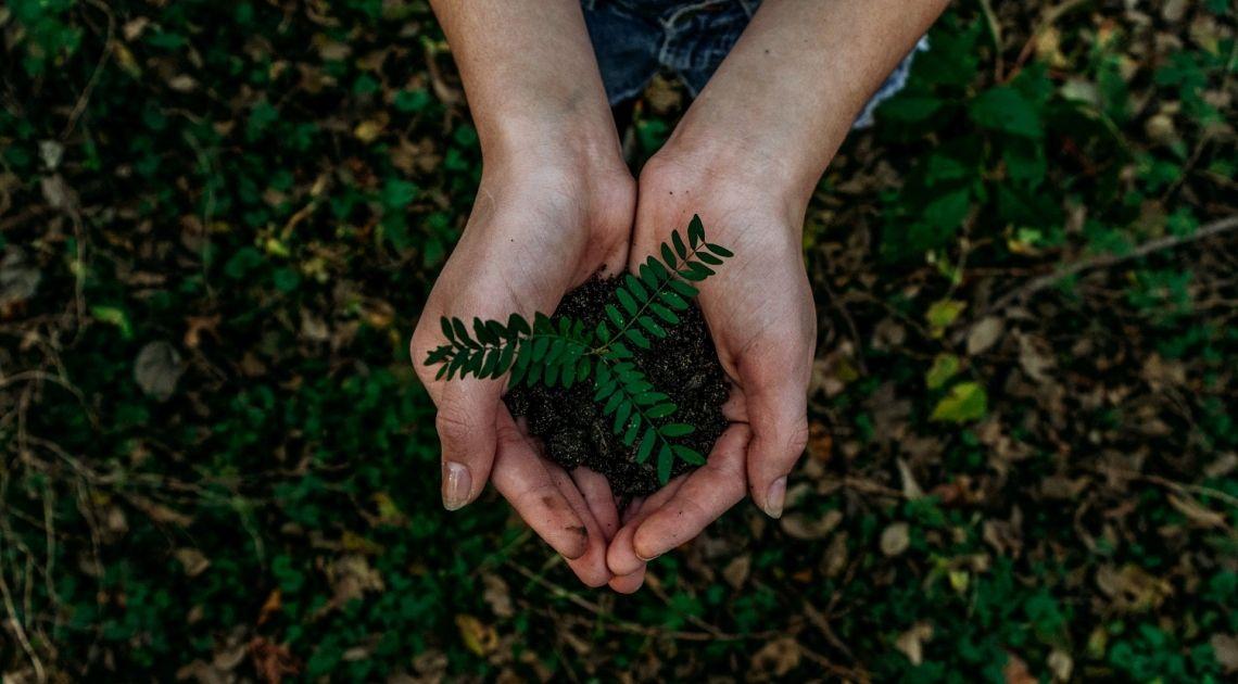 La economía verde: BBVA Uruguay emite bonos sostenibles