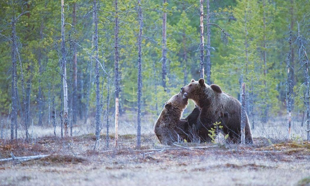 Los osos acechan al Dow Jones en la previa a las elecciones presidenciales