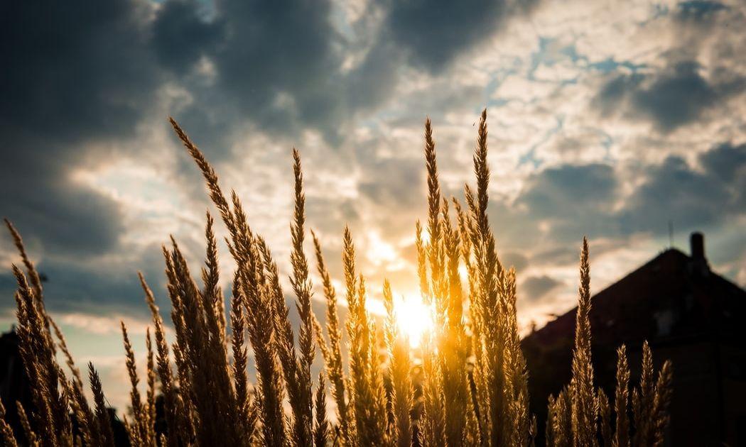No todas las materias primas agrícolas se recuperan igual