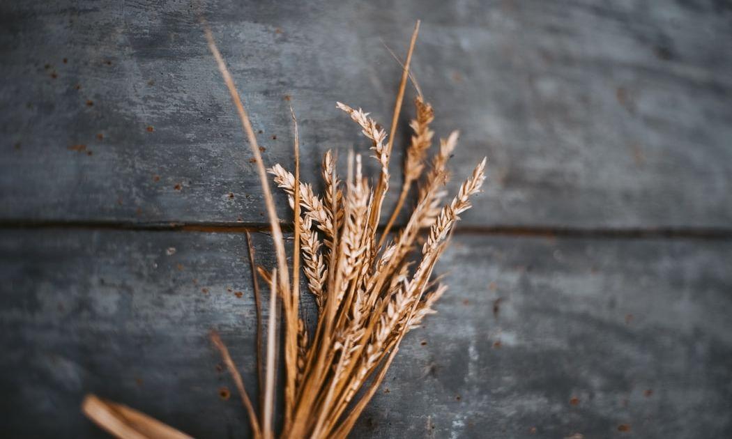 ¿Qué está pasando con el precio del trigo?