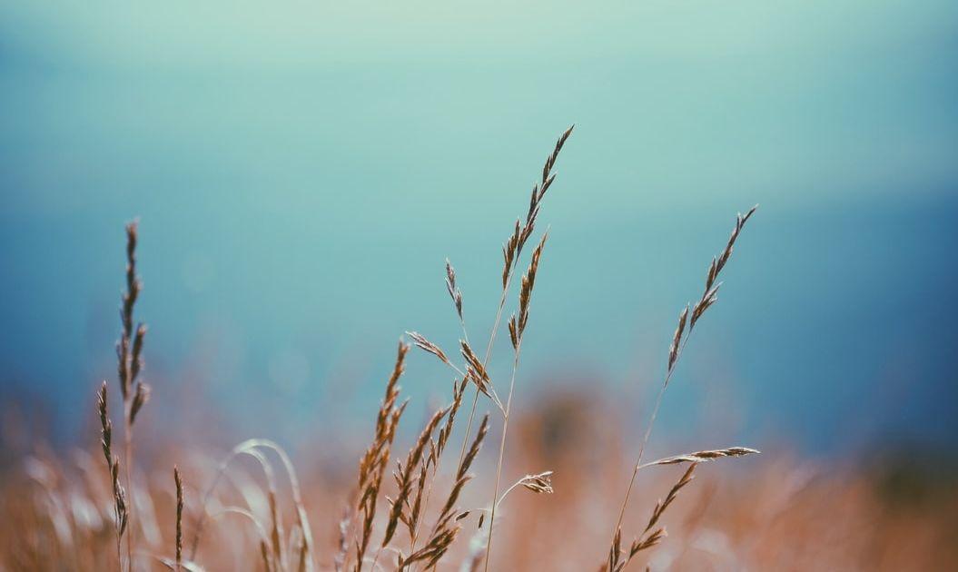 Situación y perspectivas de las materias primas agrícolas
